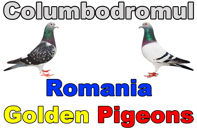 Columbodromul International ROMANIA GOLDEN PIGEONS